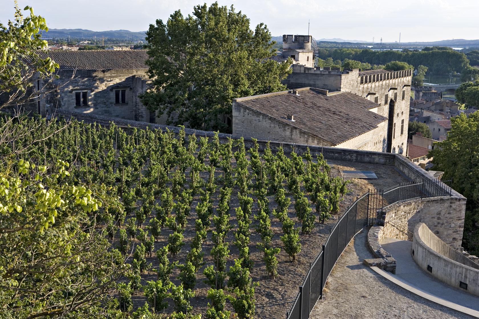 Clos de la Vigne du Palais des Papes