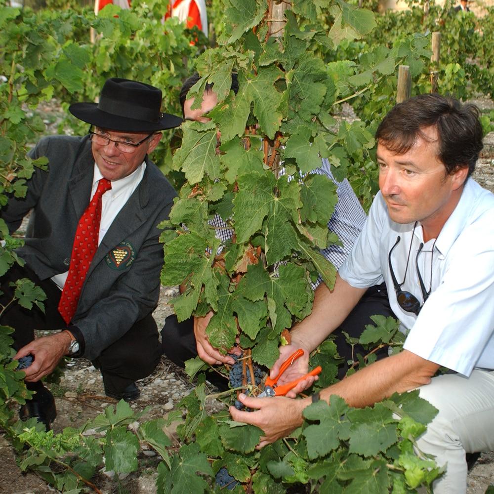 Vendange du Clos de la Vigne du Palais des Papes