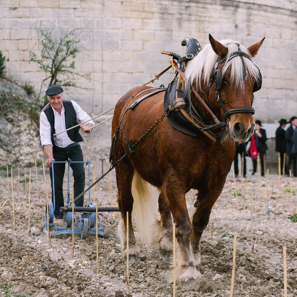 Replantation du Clos de la Vigne du Palais des Papes